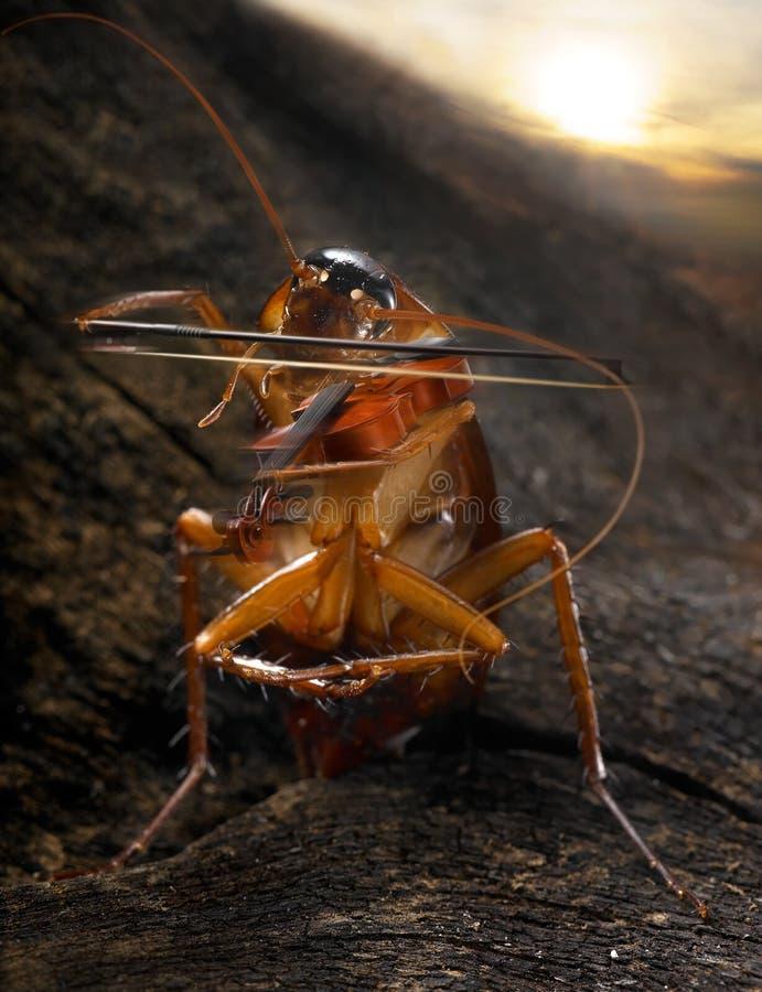 蟑螂小提琴手 免版税库存图片