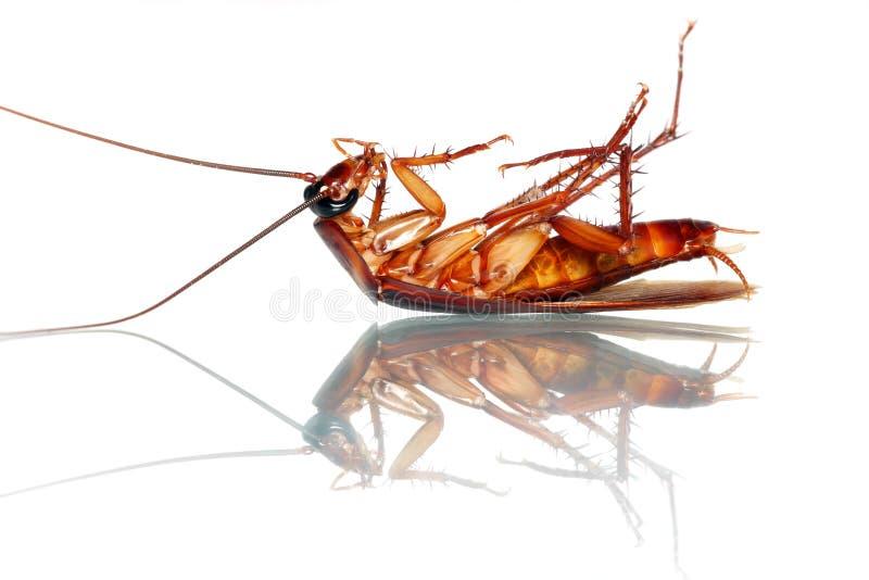 蟑螂死亡 免版税库存照片