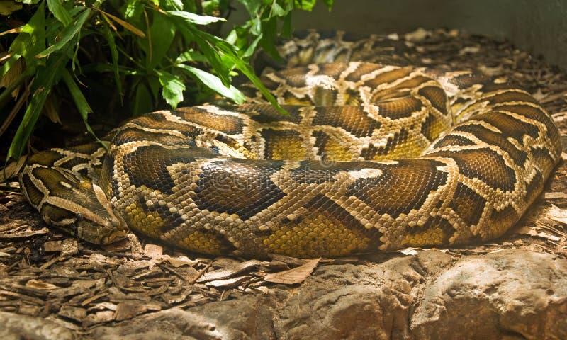 蟒蛇卷起的缩窄器玻璃容器 免版税库存图片