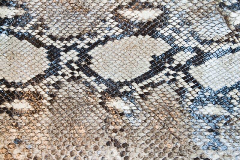 蟒蛇模式皮肤蛇纹理 免版税库存图片