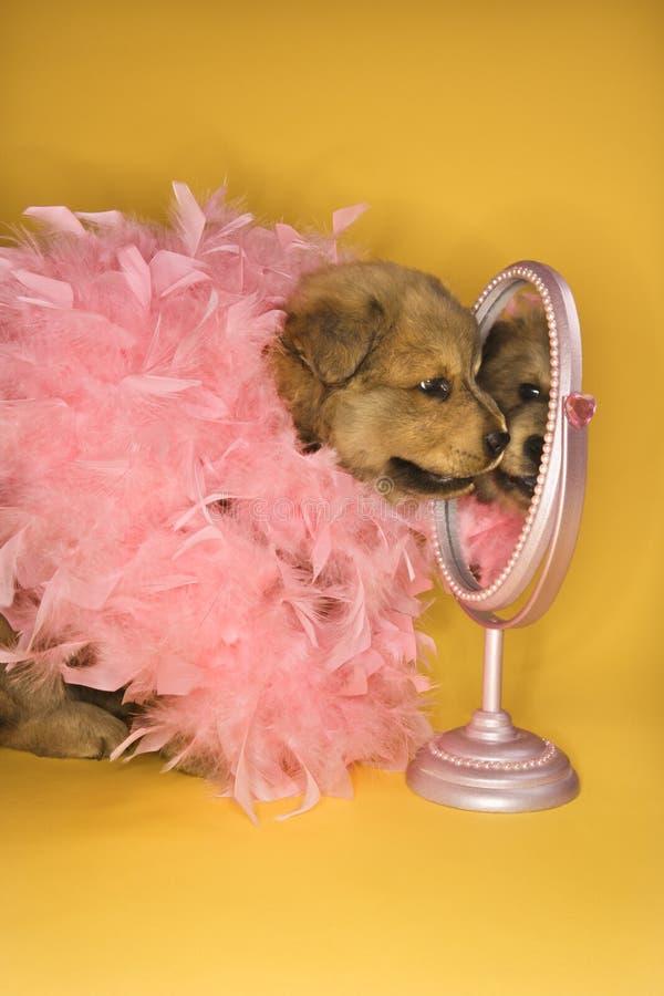 蟒蛇羽毛前面镜子粉红色小狗佩带 免版税库存图片