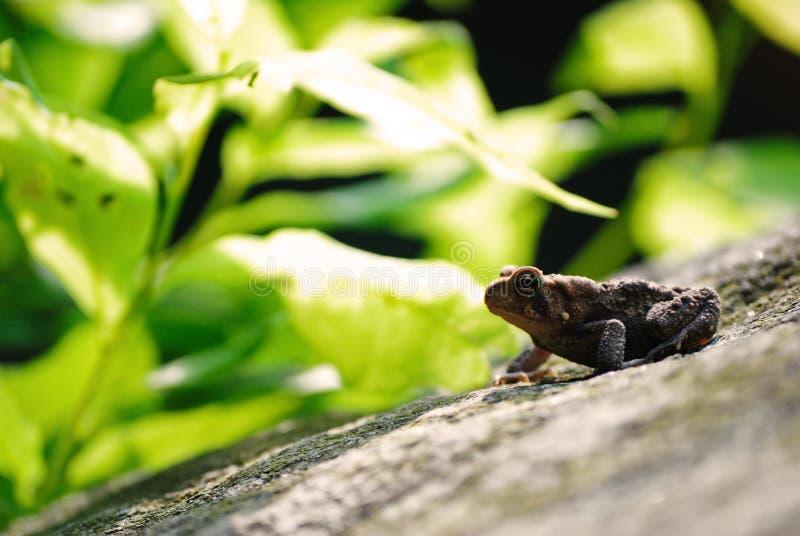 蟾蜍有绿色叶茂盛背景 库存照片