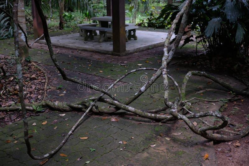 蠕动的木头阻拦了方式 免版税库存图片