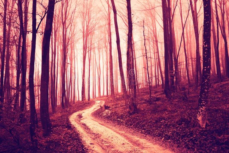 蠕动的红色有路的饱和的森林 库存照片