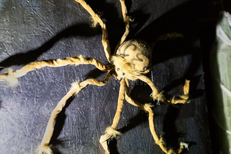 蠕动的长毛的蜘蛛在墙壁上爬行 免版税库存照片
