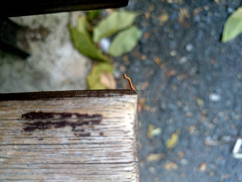 蠕虫姿态 免版税库存照片