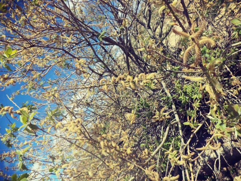 蠕虫树 库存图片