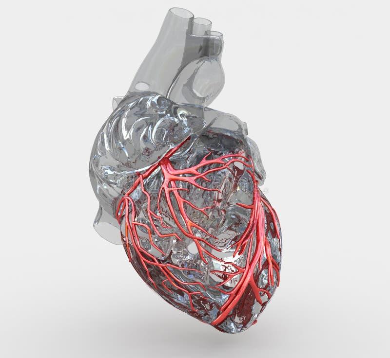 血管心脏 库存例证
