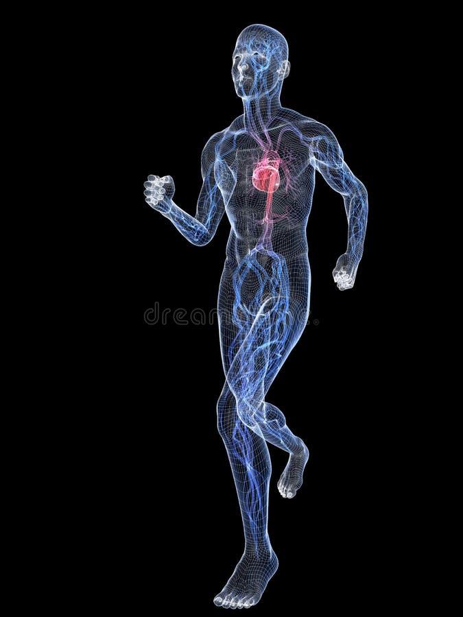 血管慢跑者的系统 皇族释放例证
