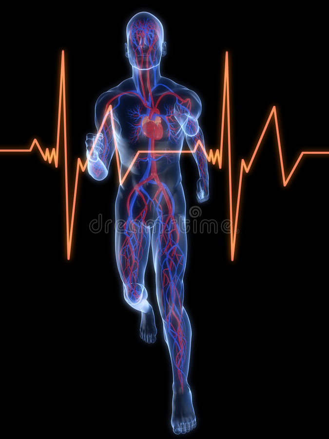 血管慢跑者的系统 向量例证