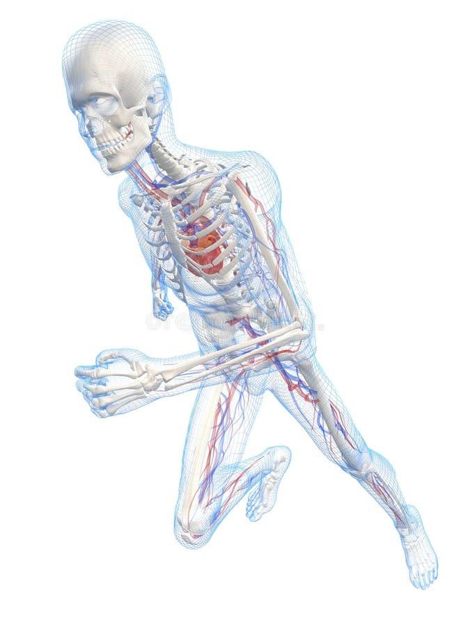 血管连续概要的系统 库存例证