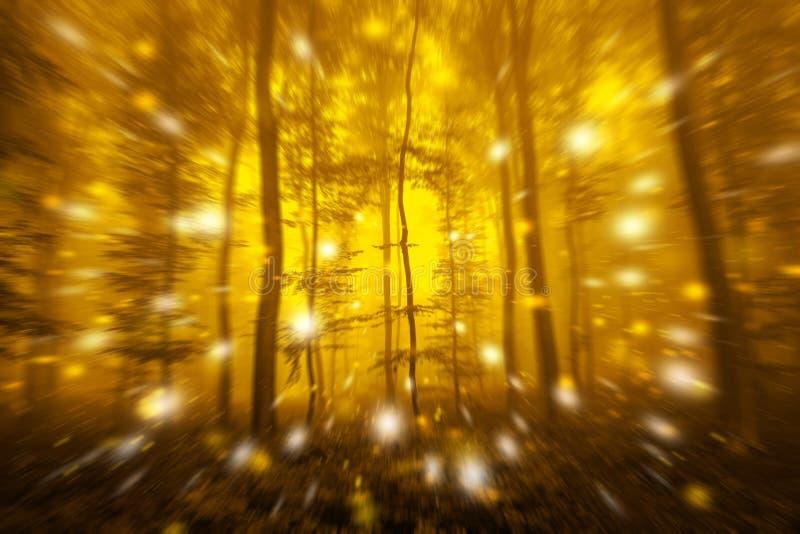行动有萤火虫光的被弄脏的森林 库存照片