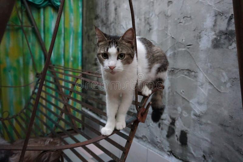 行动猫 免版税库存图片