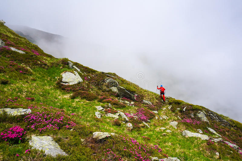 行动的妇女,远足在与北欧人走的杆的山 免版税库存图片