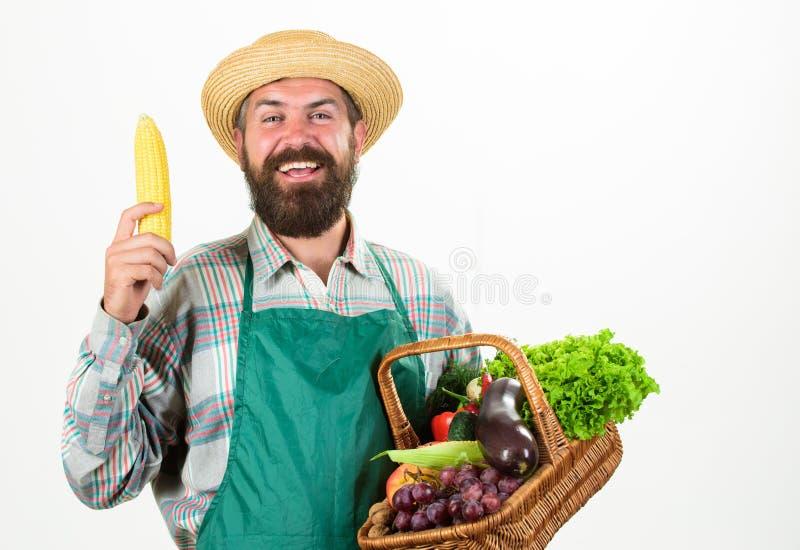 行家花匠穿戴围裙运载菜 农夫草帽举行棒子和篮子菜 新鲜有机 库存照片
