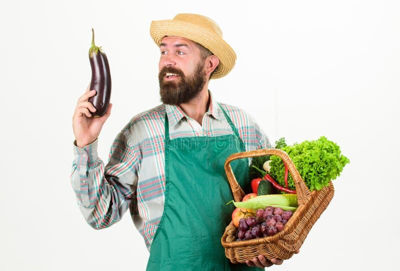 行家花匠穿戴围裙运载菜 农夫草帽举行茄子和篮子菜 新鲜有机 库存图片