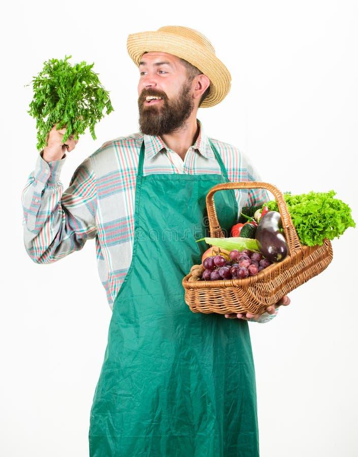 行家花匠穿戴围裙运载菜 农夫草帽举行荷兰芹和篮子菜 有胡子的人 免版税库存照片
