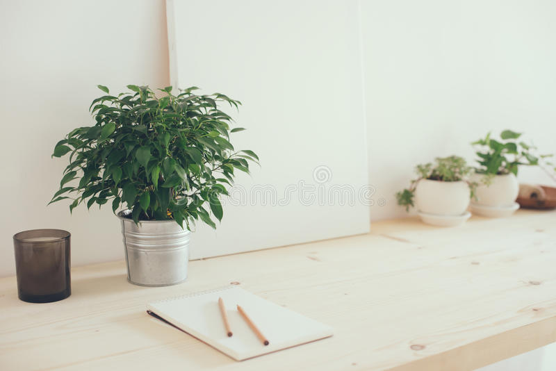 行家artist& x27; s工作区、植物和帆布 免版税库存照片