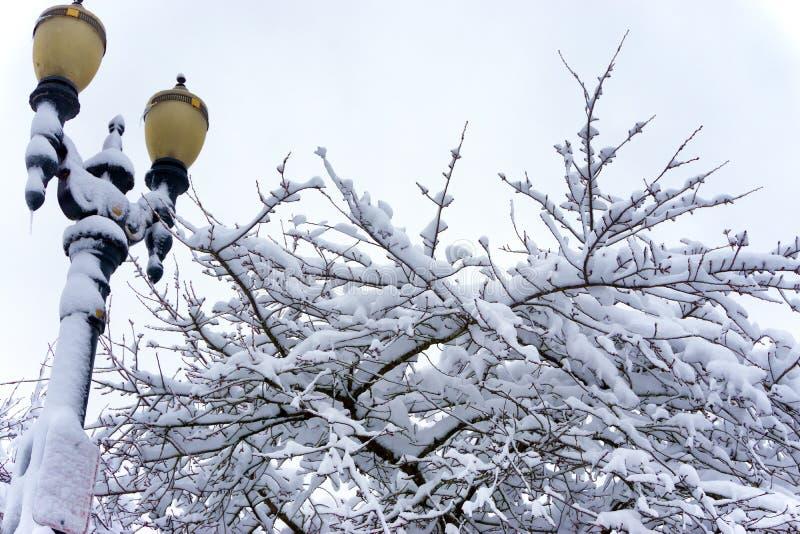 街灯、树和雪 库存图片