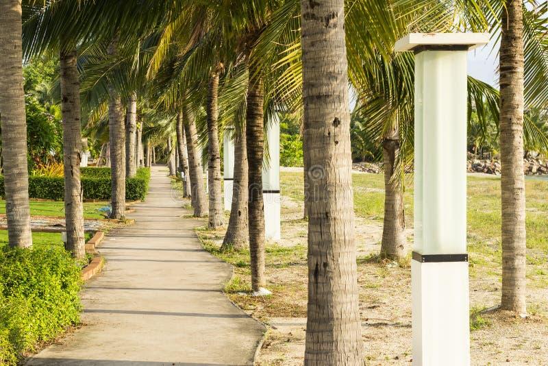 街灯和椰子和走道在庭院公园在海滩附近晚上与阳光 库存照片
