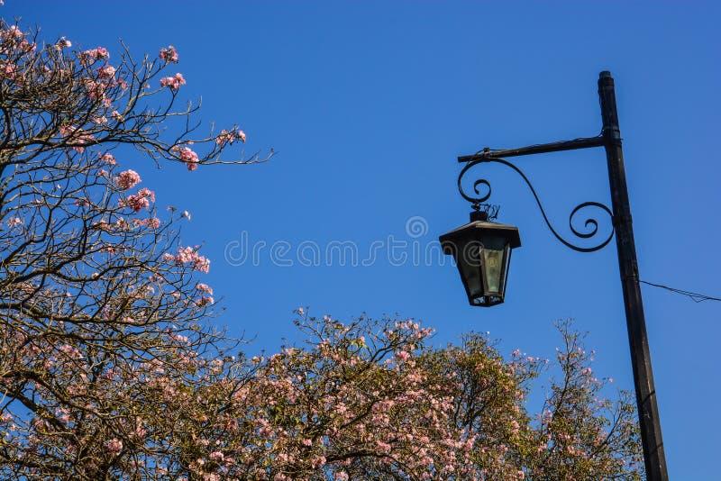 街灯和花在安提瓜岛,危地马拉 库存照片