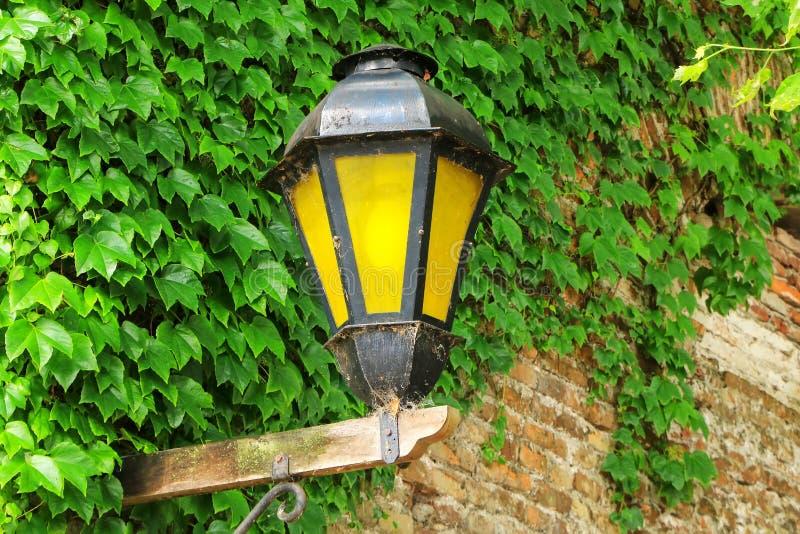 街灯对有常春藤的墙壁在历史的处所科洛尼亚省 图库摄影