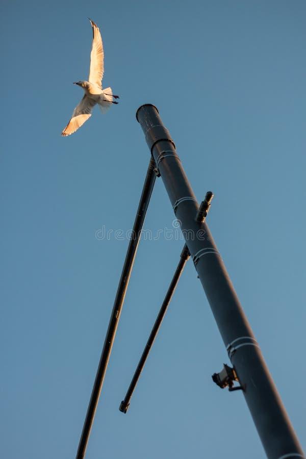 街灯的一次鸟飞行 库存照片