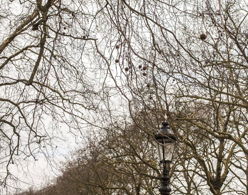 街道在伦敦,阴沉的天,分支 库存图片