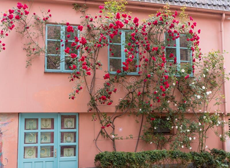 街道在有花卉装饰的老镇 与玫瑰的中世纪大厦在墙壁上 古老建筑学在欧洲 免版税图库摄影