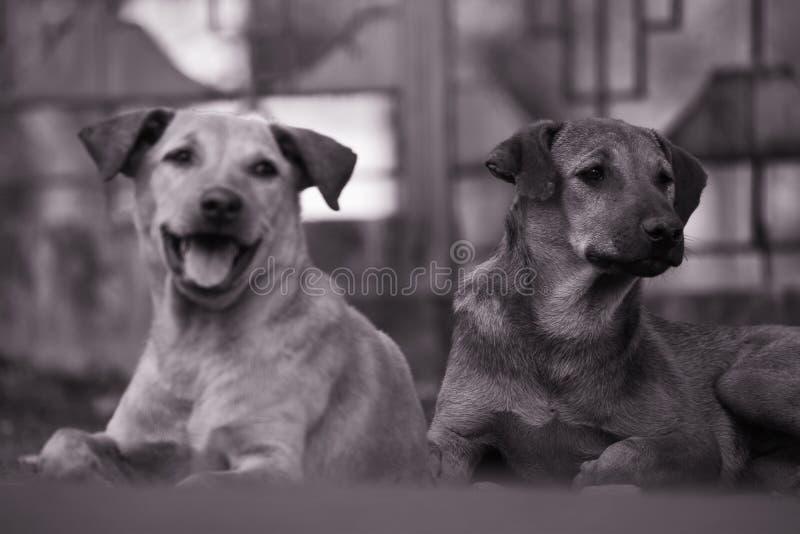 街道狗也是美丽的 库存图片