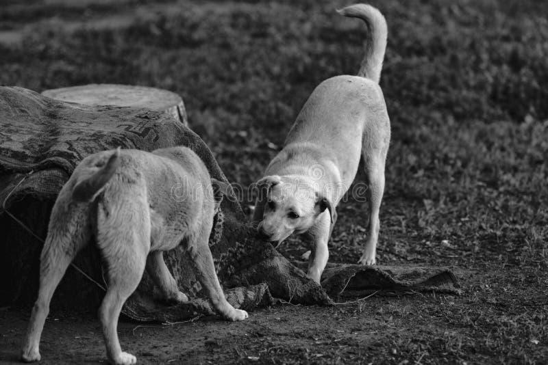 街道狗 库存照片