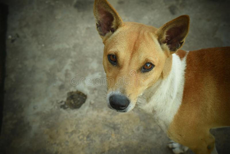 街道狗 免版税库存照片