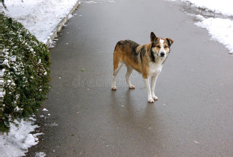 街道狗 免版税图库摄影