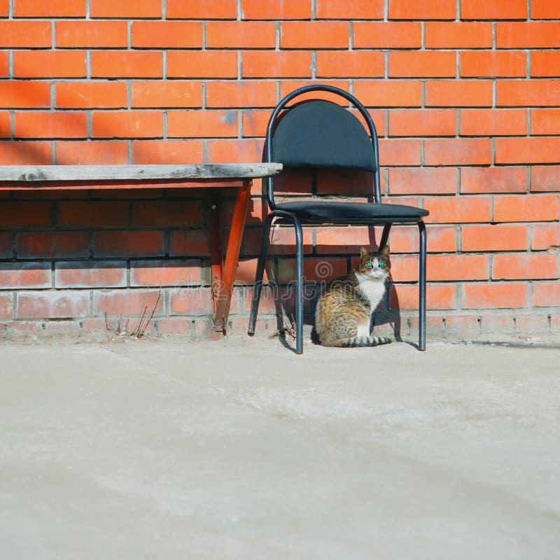 街道猫和被放弃的椅子在砖墙附近 免版税库存图片