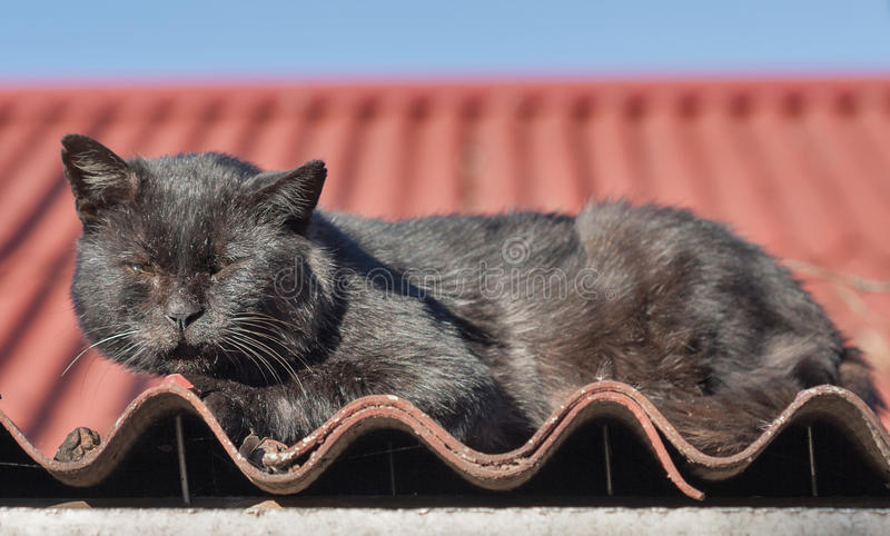 黑街道猫画象在战斗损坏了 图库摄影