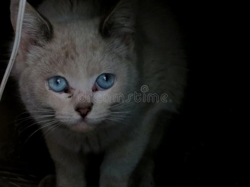 街道猫 免版税库存图片