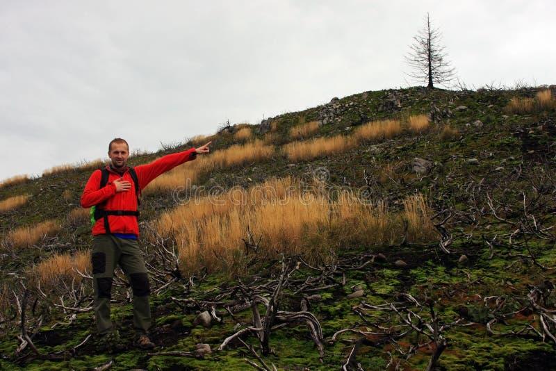 表明在小山上面的年轻人一棵树 免版税库存图片