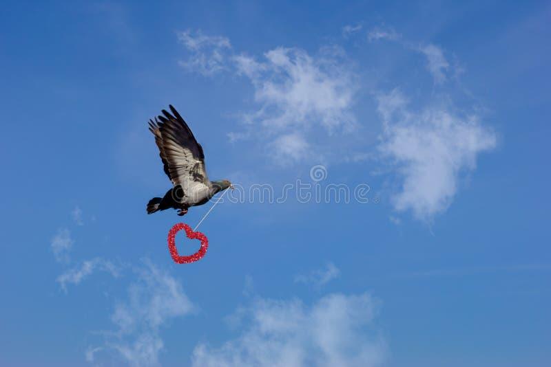 表达与飞行鸠的爱 免版税库存图片