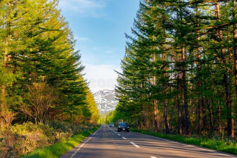 表面上在日落期间的不尽的柏油路 树行沿乡下公路的在乡下 库存照片
