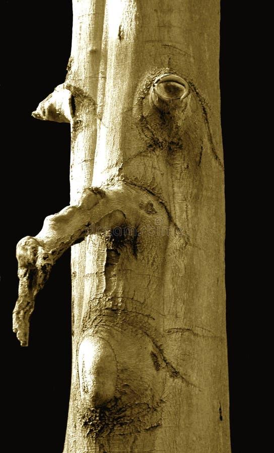 表面人结构树 库存图片
