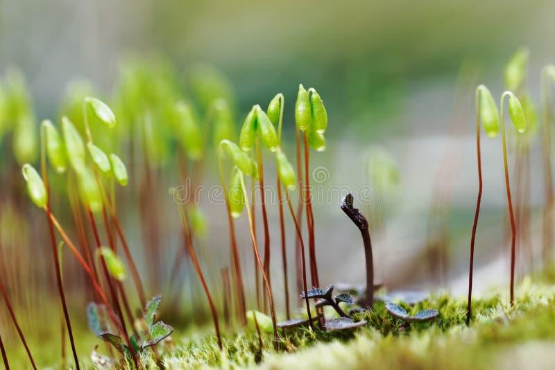 表面生长苔藓的特写 图库摄影