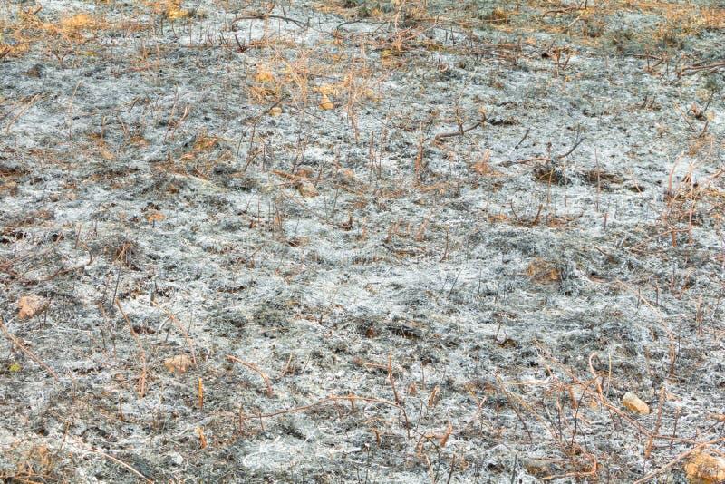 表面被烧的土地草叶子在夏天是灰 大气污染全球性变暖 库存图片