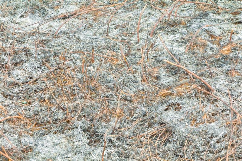 表面被烧的土地草叶子在夏天是灰 大气污染全球性变暖 免版税图库摄影