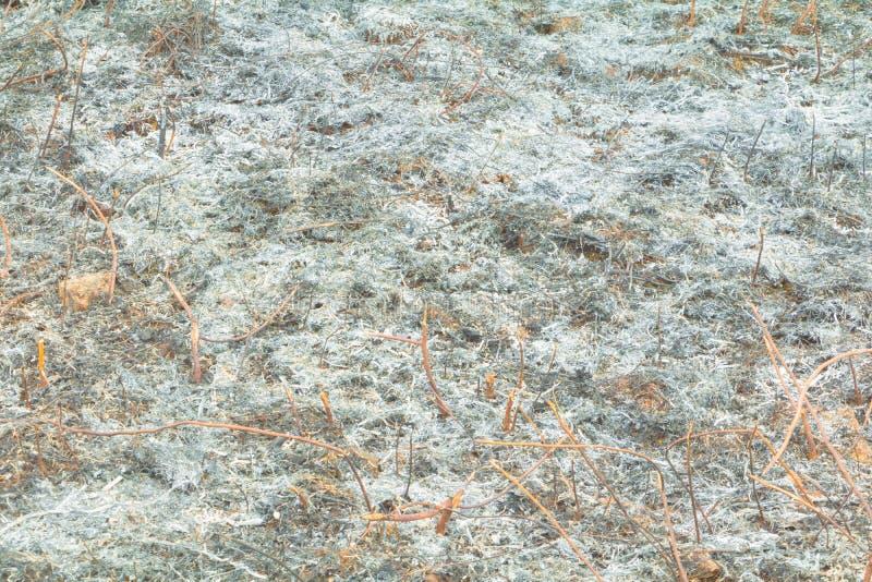 表面被烧的土地草叶子在夏天是灰 大气污染全球性变暖 库存照片