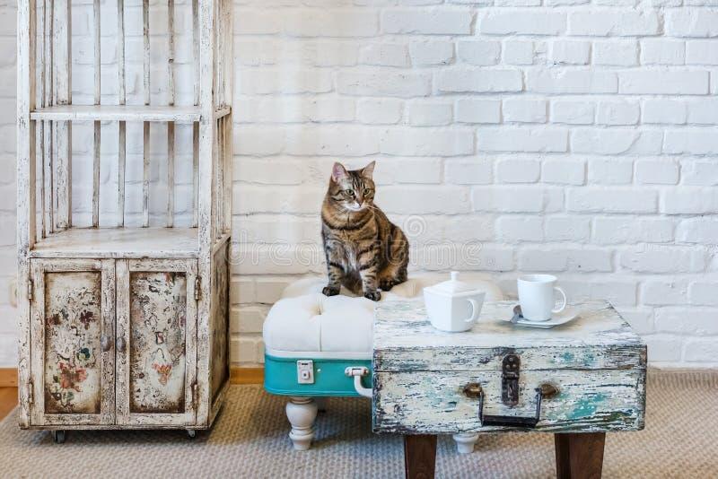 表,椅子,在一个白色砖墙的背景的架子在葡萄酒顶楼内部与猫 免版税库存图片
