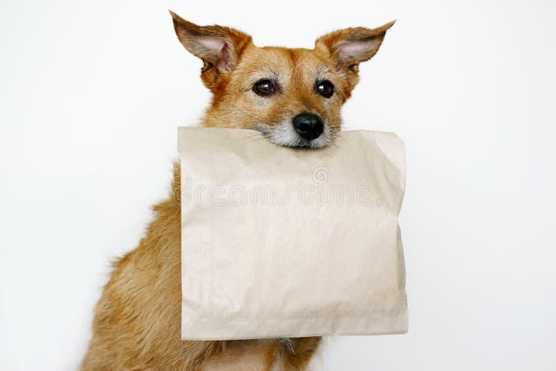 袋子棕色狗 免版税库存照片