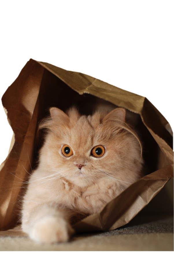 袋子猫隐藏了得里面 免版税库存图片