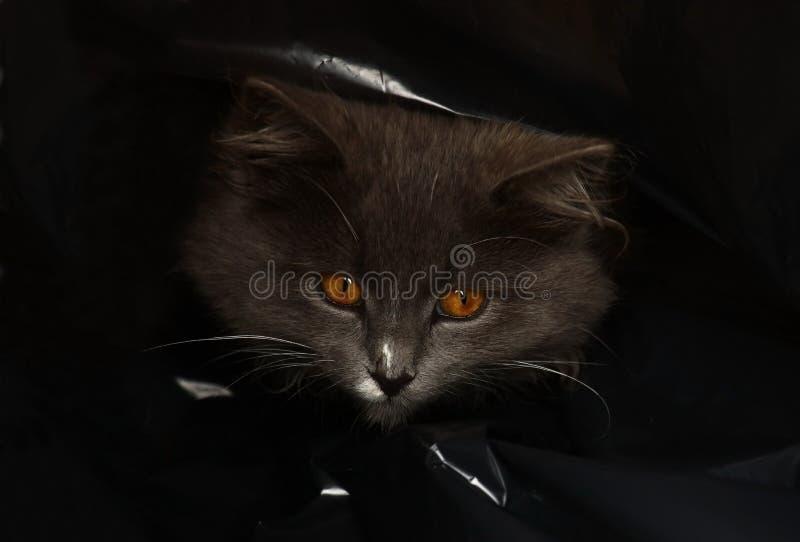 袋子猫 库存图片