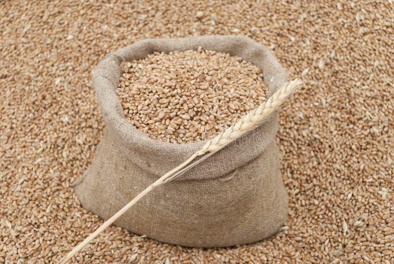 袋子麦子。 图库摄影
