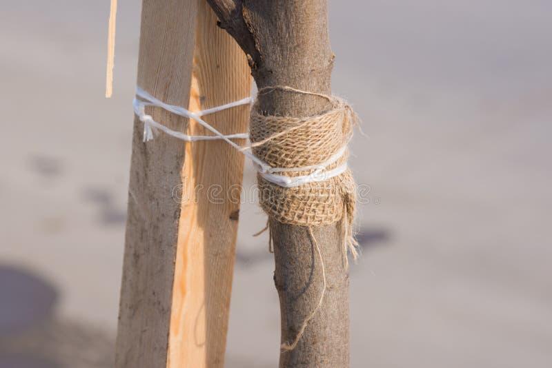 袜带与一条绳索的树苗树对木酒吧 免版税图库摄影